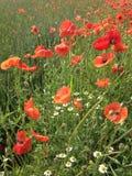 Flower, Wildflower, Meadow, Ecosystem stock photo