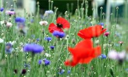 Flower, Wildflower, Meadow, Field