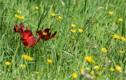 Flower, Wildflower, Meadow, Grass stock images