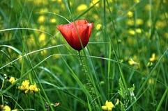 Flower, Wildflower, Meadow, Plant royalty free stock photo