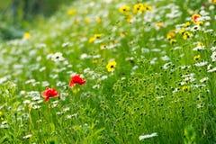 Flower, Wildflower, Meadow, Vegetation Stock Image
