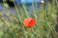 Flower, Wildflower, Plant, Vegetation Royalty Free Stock Image