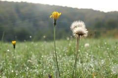 Flower, Wildflower, Prairie, Meadow stock photos