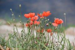 Flower, Wildflower, Vegetation, Flora Royalty Free Stock Photo