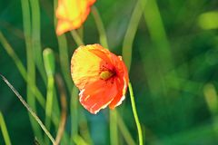 Flower, Wildflower, Vegetation, Flora Royalty Free Stock Photos