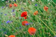 Flower, Wildflower, Vegetation, Meadow Stock Image