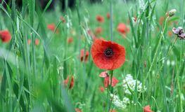 Flower, Wildflower, Vegetation, Meadow stock images