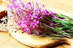 Flower Willowherb - Epilobium Angustifolium. On table stock image