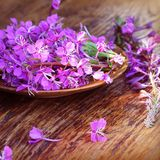 Flower Willowherb - Epilobium Angustifolium on wooden background.  royalty free stock photo