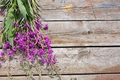 Flower Willowherb Sally bloom on wooden background. Top view. Copy space. royalty free stock photo