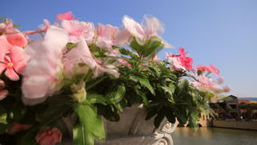 Flower in the wind stock footage