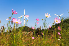 Flower with wind power Royalty Free Stock Photo