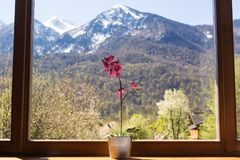 Flower on the window in the background of high mountains royalty free stock image