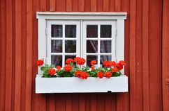 Flower, Window, Home, Floristry Royalty Free Stock Photo