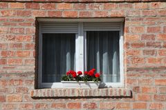 Flower in the window Stock Images