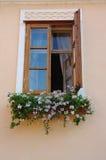 Flower windows Royalty Free Stock Image