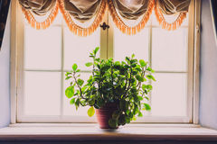 Flower on a windowsill Royalty Free Stock Photos