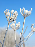 Flower in winter Royalty Free Stock Photography