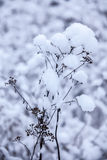 Flower in winter with snow Royalty Free Stock Image