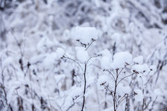 Flower in winter with snow Stock Photography