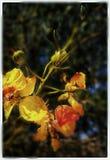 Flower in winter stock image