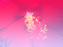 Flower wit filters color Royalty Free Stock Images