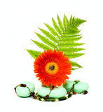 Flower With Soap And Beads Stock Photo
