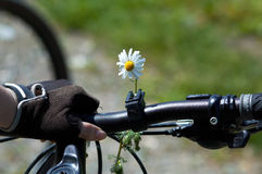 Flower on woman bike. Camomile Stock Photos