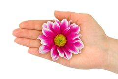 Flower in woman hand Stock Photo