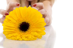 Flower and woman hands Stock Image