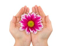 Flower in woman hands Royalty Free Stock Photography