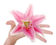 Flower in women hand. Royalty Free Stock Images