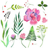 Flower. Wonderful beautiful pink and green floral element on white background Stock Photo