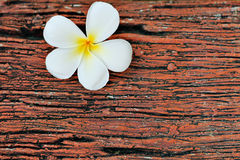 Flower on wood Royalty Free Stock Photos