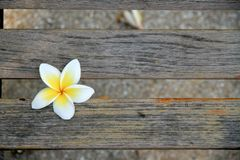 Flower on wood Stock Images