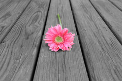 Flower on Wood B&W Stock Photography