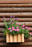 Flower and wood background Royalty Free Stock Images