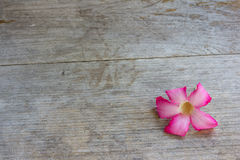 Flower and wood Stock Photography