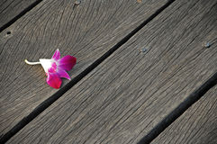 Flower on wood planks Royalty Free Stock Photo