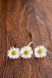 Flower on wooden background Stock Photos