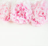 Flower wooden background Royalty Free Stock Photos
