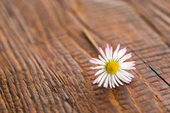 Flower on wooden background Royalty Free Stock Images