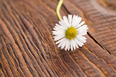 Flower on wooden background Royalty Free Stock Image