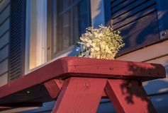 Flower on a wooden bench. Photo taken in summer 2016. This phot represents the missed appointment. The person was expected and she did not come. Quebec, Canada stock images