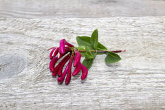 Flower. In a wooden crack Royalty Free Stock Photos