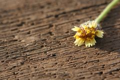 Flower on wooden plank. Fallen flower on wooden plank Royalty Free Stock Photos