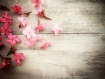 Flower on  wooden in soft focus with vintage tone. Beautiful pink cut flower on dark wooden in blur or soft vintage tone Stock Photography