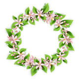 Flower wreath with beautiful pink flowers Stock Image