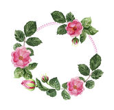 Flower wreath with roses. Frame for text. Romantic spring design element for wedding, valentine, greeting card, invitation. Watercolor hand painting Royalty Free Stock Photo