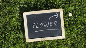 Flower written Stock Image